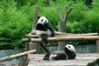 都江堰卧龙熊猫基地